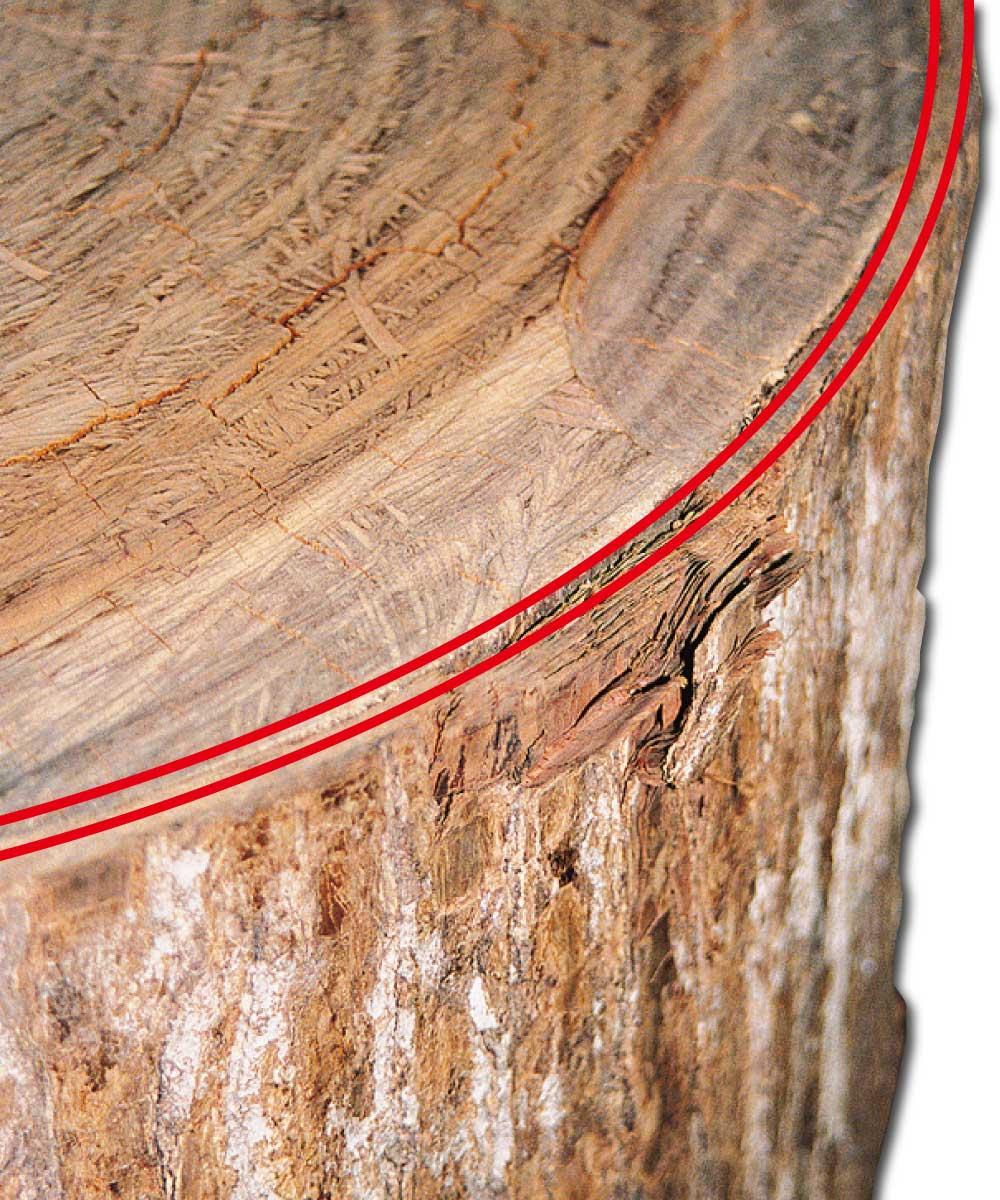 タヒボ内部樹皮